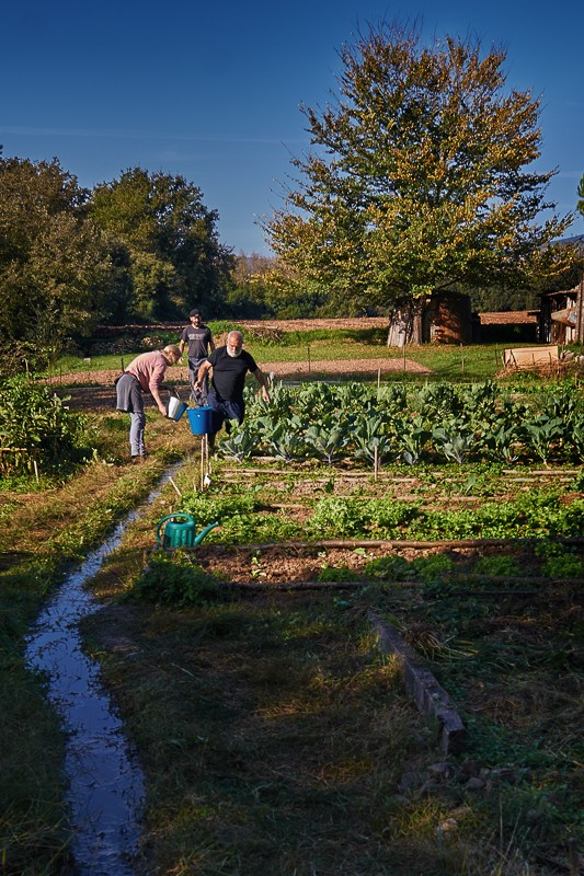 Cultivant l'hort