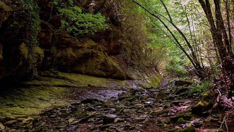Discovering Fluvià: Viure la natura