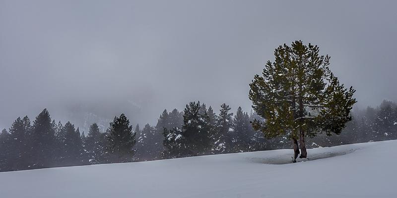 Darrer paisatge d'un hivern ben estrany